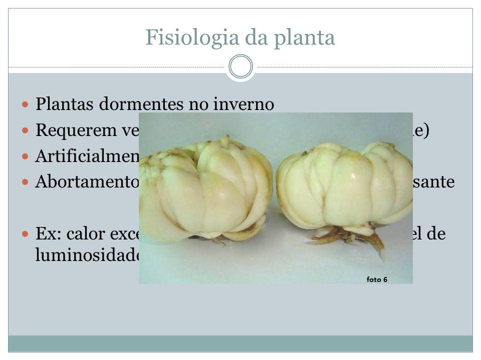 Fisiologia da planta Plantas dormentes no inverno Requerem vernalização (resfriamento e umidade) Artificialmente (mín.