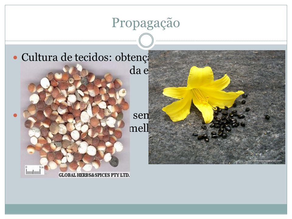 Propagação Cultura de tecidos: obtenção de variedades livres de vírus, propagação rápida e mudas de novas variedades Por meio de sementes: semeadas em temperatura 13 a 18°C, é utilizado em melhoramento genético