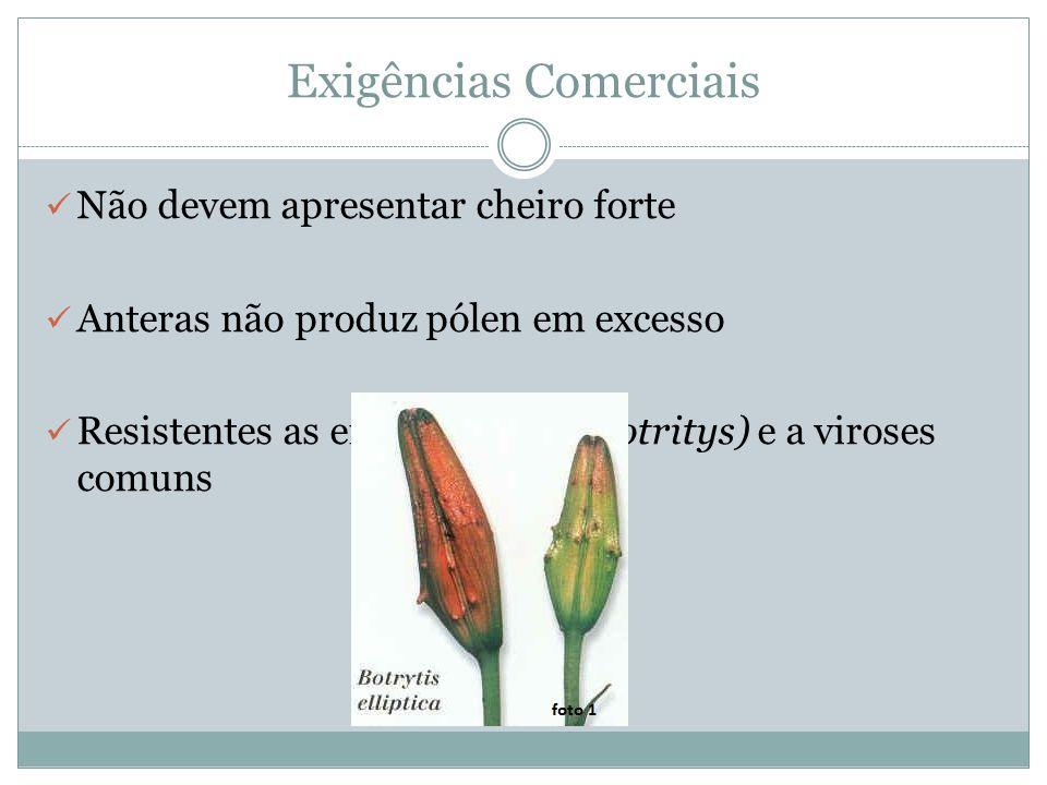 Exigências Comerciais Não devem apresentar cheiro forte Anteras não produz pólen em excesso Resistentes as enfermidades (Botritys) e a viroses comuns