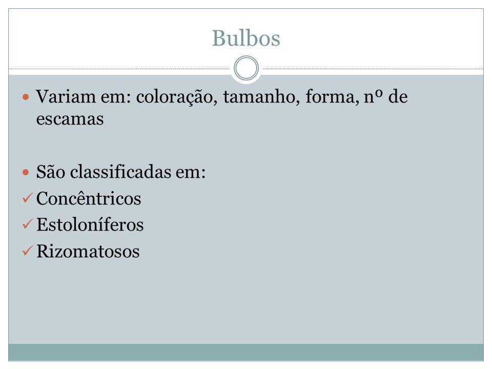 Bulbos Variam em: coloração, tamanho, forma, nº de escamas São classificadas em: Concêntricos Estoloníferos Rizomatosos