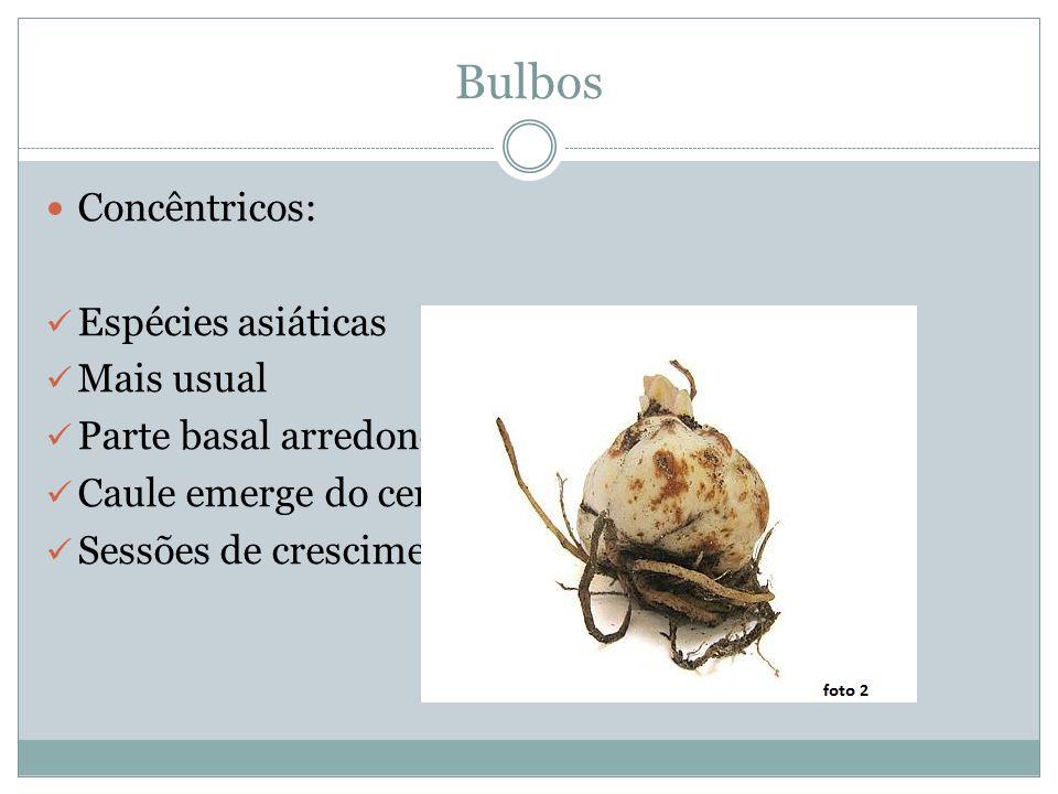 Bulbos Estoloníferos: Mesma forma que o concêntrico Mas são comercializados com um ou mais estolões que saem da base