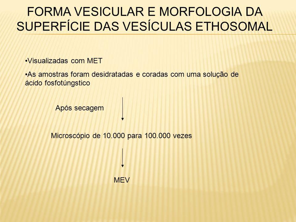 FORMA VESICULAR E MORFOLOGIA DA SUPERFÍCIE DAS VESÍCULAS ETHOSOMAL Visualizadas com MET As amostras foram desidratadas e coradas com uma solução de ácido fosfotúngstico Após secagem Microscópio de 10.000 para 100.000 vezes MEV