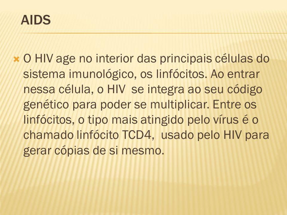  O HIV age no interior das principais células do sistema imunológico, os linfócitos.