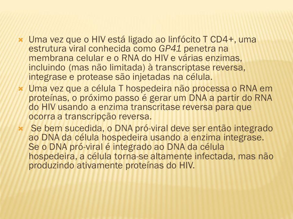  Uma vez que o HIV está ligado ao linfócito T CD4+, uma estrutura viral conhecida como GP41 penetra na membrana celular e o RNA do HIV e várias enzimas, incluindo (mas não limitada) à transcriptase reversa, integrase e protease são injetadas na célula.
