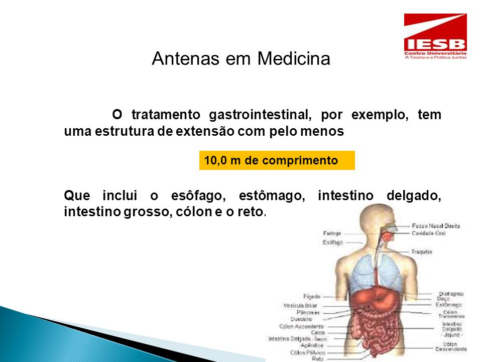 Antenas em Medicina O tratamento gastrointestinal, por exemplo, tem uma estrutura de extensão com pelo menos Que inclui o esôfago, estômago, intestino delgado, intestino grosso, cólon e o reto.