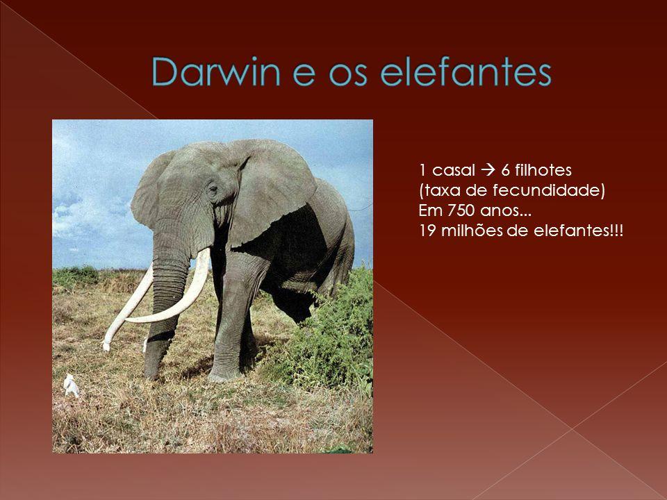 1 casal  6 filhotes (taxa de fecundidade) Em 750 anos... 19 milhões de elefantes!!!