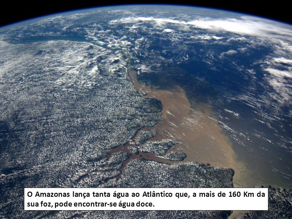 A selva do Amazonas fornece mais de 20% de oxigénio à Terra.