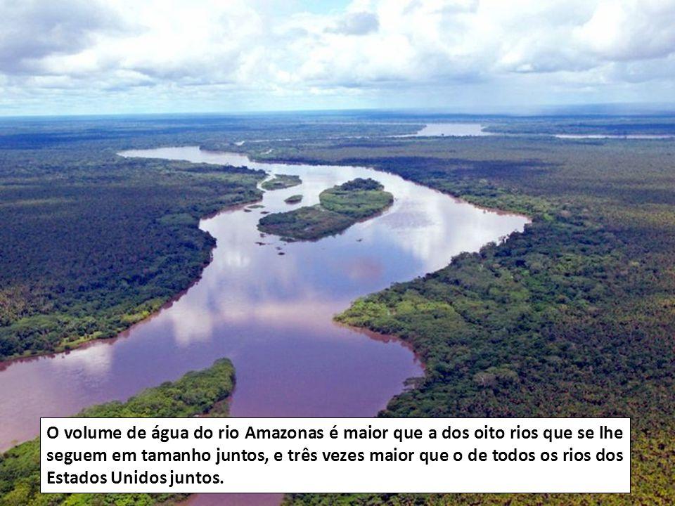 O Amazonas lança tanta água ao Atlântico que, a mais de 160 Km da sua foz, pode encontrar-se água doce.