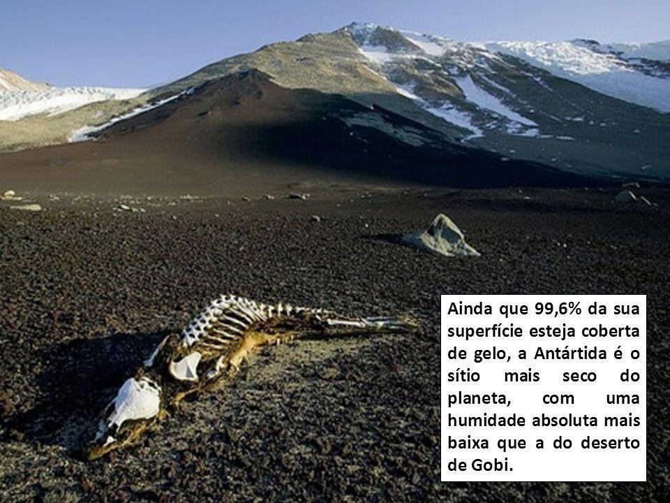 A Antártida é a única parte do nosso planeta que não pertence a nenhum País.