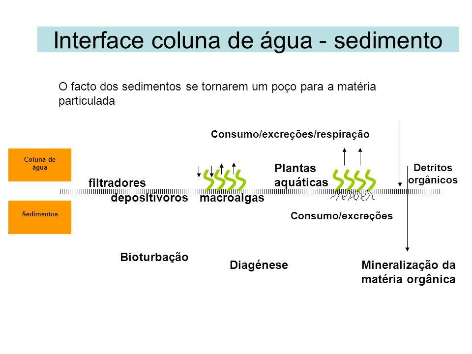Interface coluna de água - sedimento Coluna de água Sedimentos Bioturbação Detritos orgânicos Consumo/excreções macroalgas Consumo/excreções/respiração Mineralização da matéria orgânica filtradores Plantas aquáticas depositívoros Diagénese O facto dos sedimentos se tornarem um poço para a matéria particulada