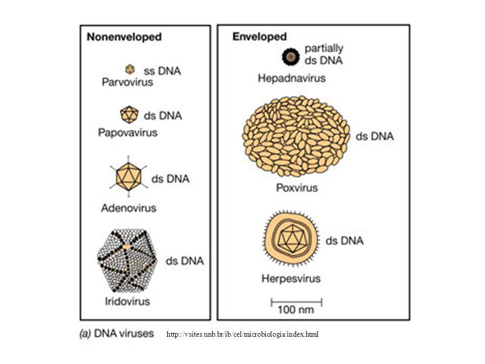 http://vsites.unb.br/ib/cel/microbiologia/index.html