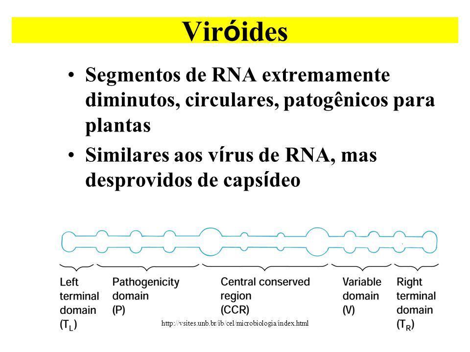 Segmentos de RNA extremamente diminutos, circulares, patogênicos para plantas Similares aos v í rus de RNA, mas desprovidos de caps í deo Vir ó ides http://vsites.unb.br/ib/cel/microbiologia/index.html