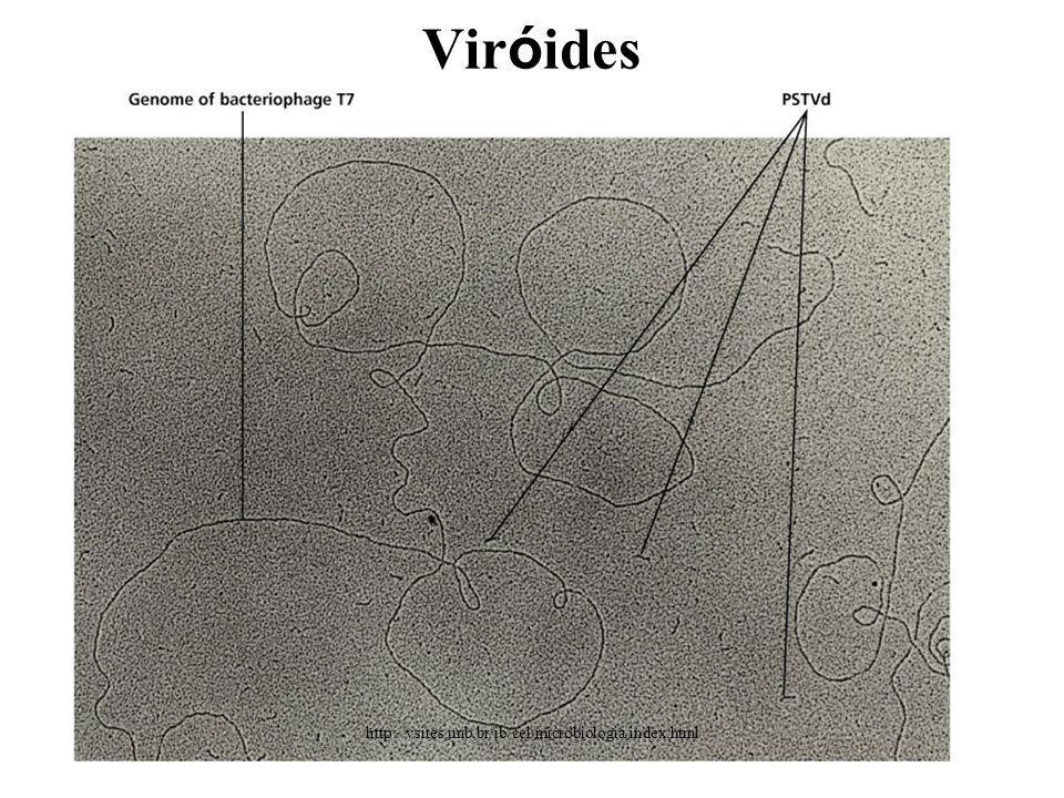 Vir ó ides http://vsites.unb.br/ib/cel/microbiologia/index.html