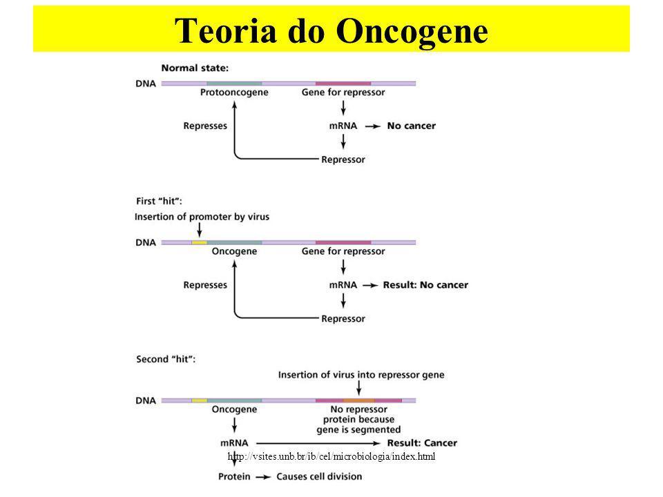 Teoria do Oncogene http://vsites.unb.br/ib/cel/microbiologia/index.html