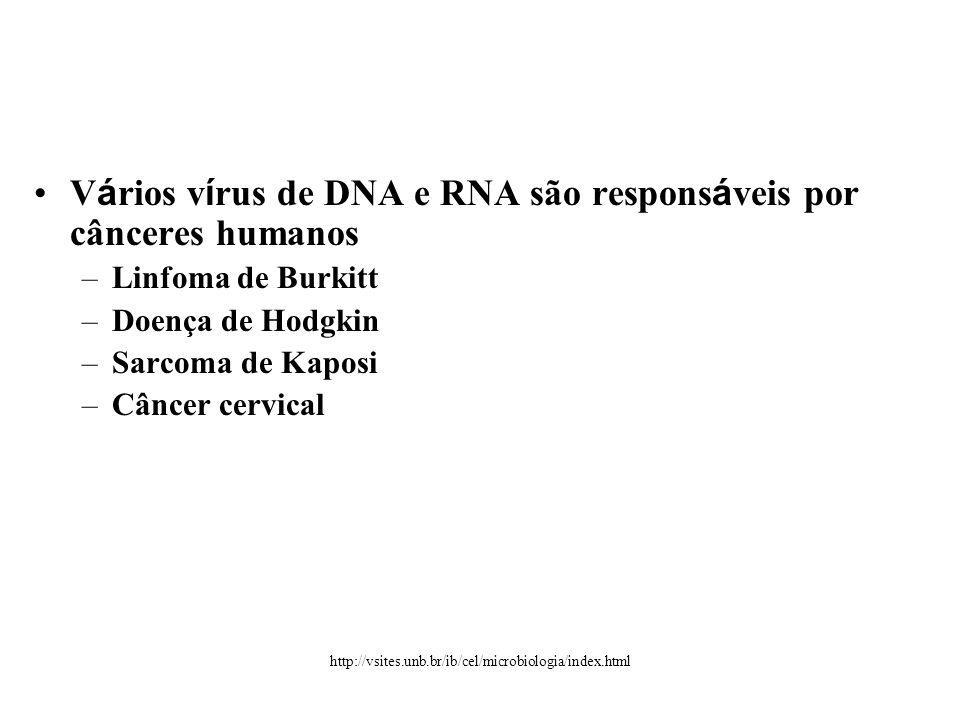 V á rios v í rus de DNA e RNA são respons á veis por cânceres humanos –Linfoma de Burkitt –Doença de Hodgkin –Sarcoma de Kaposi –Câncer cervical http://vsites.unb.br/ib/cel/microbiologia/index.html
