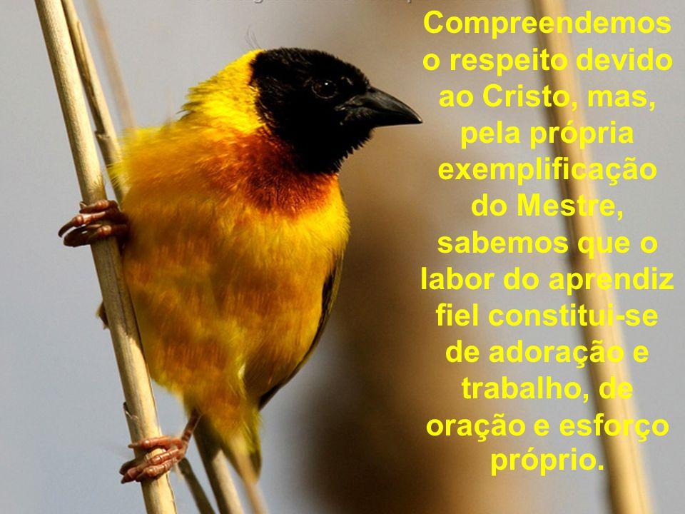 Compreendemos o respeito devido ao Cristo, mas, pela própria exemplificação do Mestre, sabemos que o labor do aprendiz fiel constitui-se de adoração e
