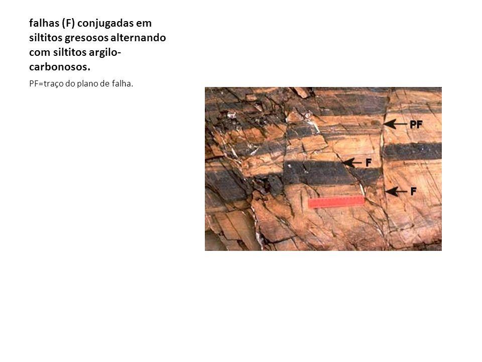 falhas (F) conjugadas em siltitos gresosos alternando com siltitos argilo- carbonosos. PF=traço do plano de falha.