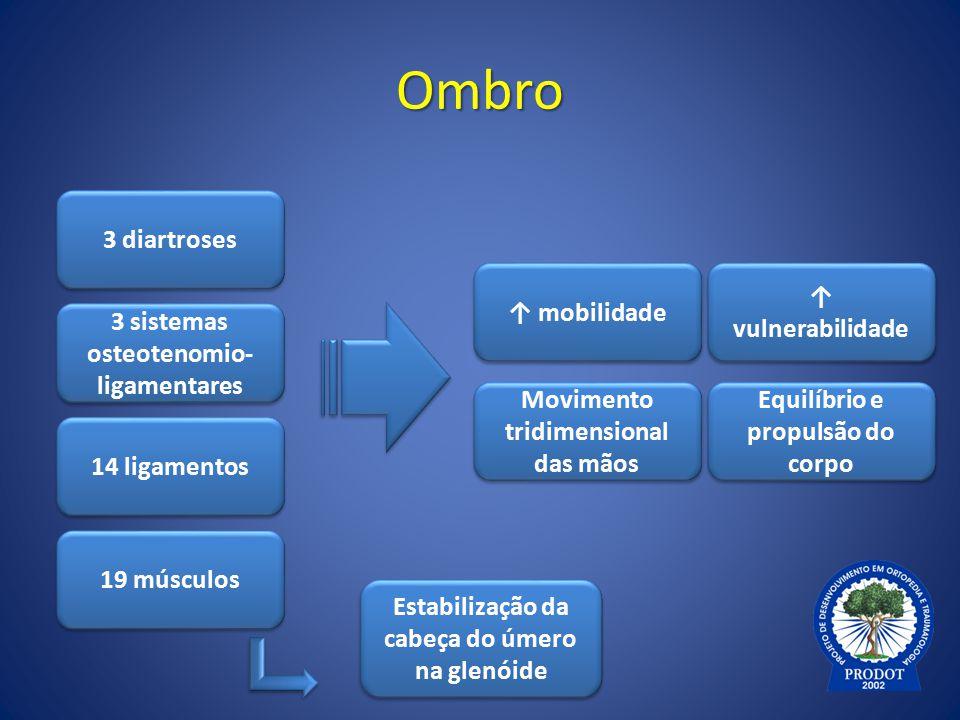 Ombro 3 diartroses 3 sistemas osteotenomio- ligamentares 3 sistemas osteotenomio- ligamentares 14 ligamentos 19 músculos ↑ mobilidade Equilíbrio e pro