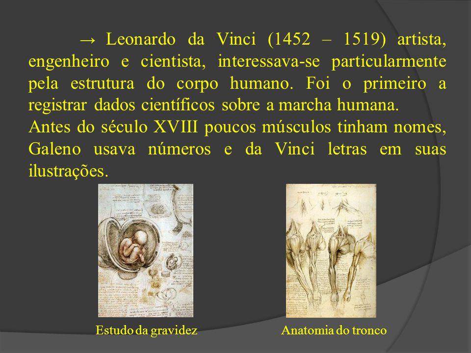 → Leonardo da Vinci (1452 – 1519) artista, engenheiro e cientista, interessava-se particularmente pela estrutura do corpo humano. Foi o primeiro a reg