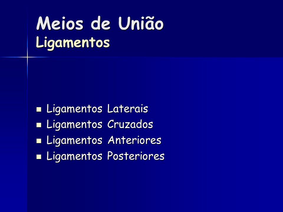 Meios de União Ligamentos Ligamentos Laterais Ligamentos Laterais Ligamentos Cruzados Ligamentos Cruzados Ligamentos Anteriores Ligamentos Anteriores Ligamentos Posteriores Ligamentos Posteriores