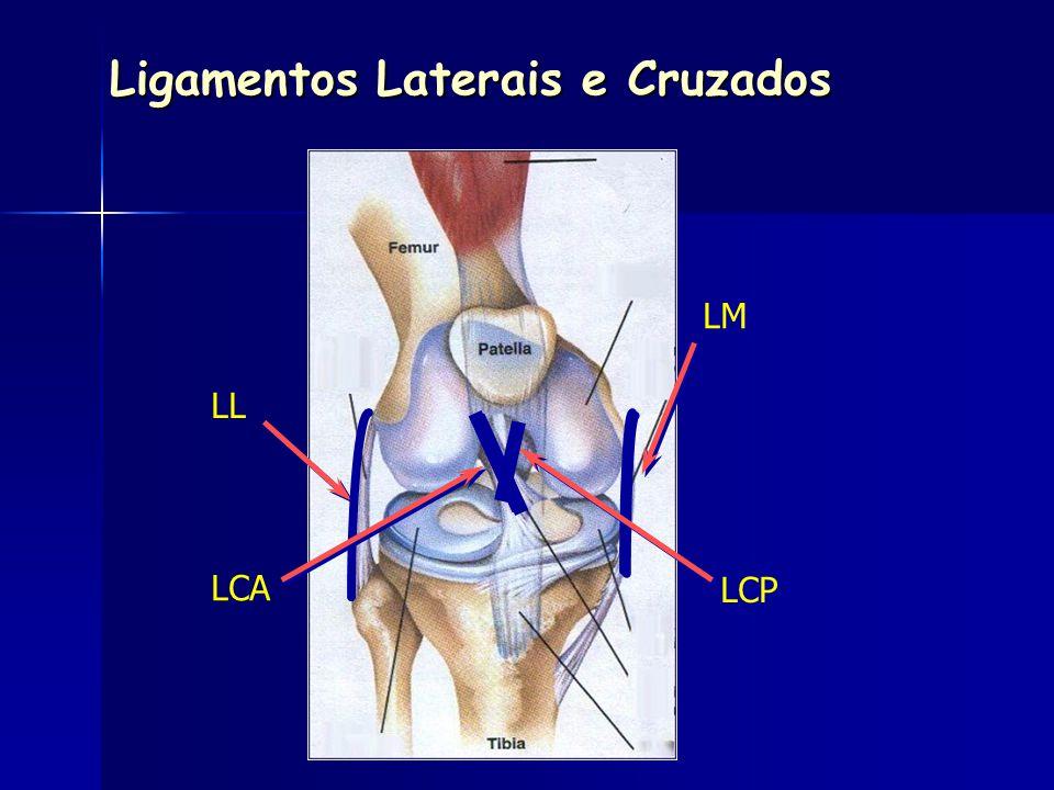 LM LL LCA LCP Ligamentos Laterais e Cruzados