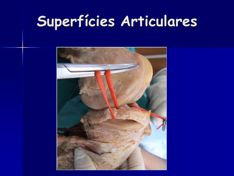 Superfícies Articulares