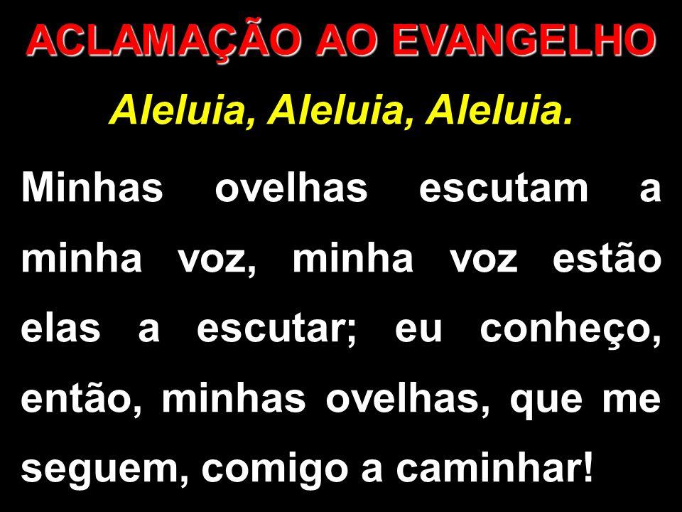 ACLAMAÇÃO AO EVANGELHO Aleluia, Aleluia, Aleluia. Minhas ovelhas escutam a minha voz, minha voz estão elas a escutar; eu conheço, então, minhas ovelha