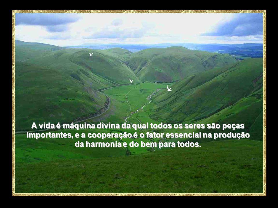 Cada um administre aos outros o dom como o recebeu, como bons dispensadores da multiforme graça de Deus. Pedro.