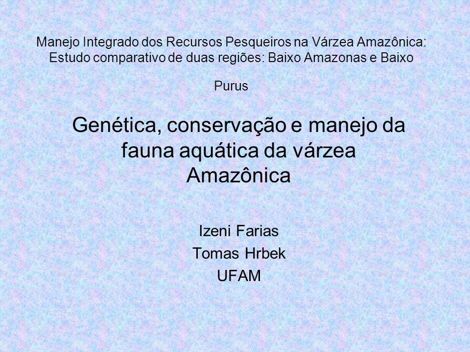Manejo Integrado dos Recursos Pesqueiros na Várzea Amazônica: Estudo comparativo de duas regiões: Baixo Amazonas e Baixo Purus Genética, conservação e