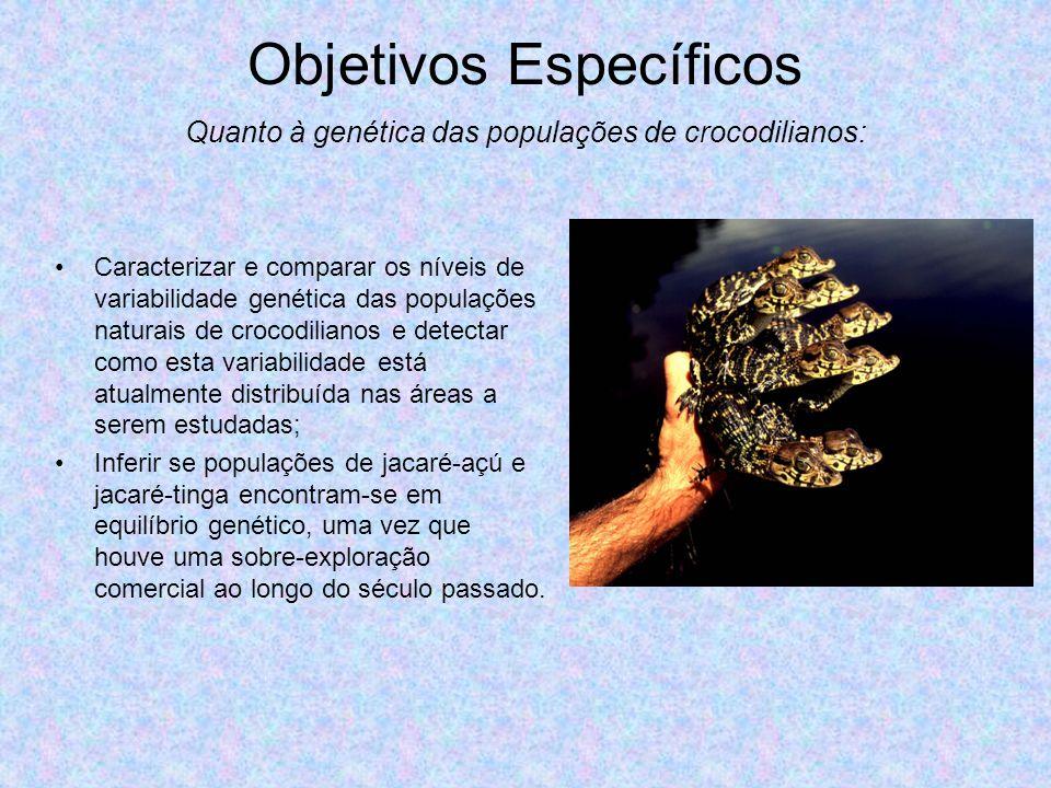 Objetivos Específicos Caracterizar e comparar os níveis de variabilidade genética das populações naturais de crocodilianos e detectar como esta variab