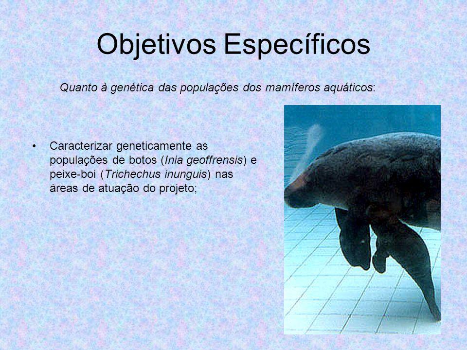 Objetivos Específicos Caracterizar geneticamente as populações de botos (Inia geoffrensis) e peixe-boi (Trichechus inunguis) nas áreas de atuação do p