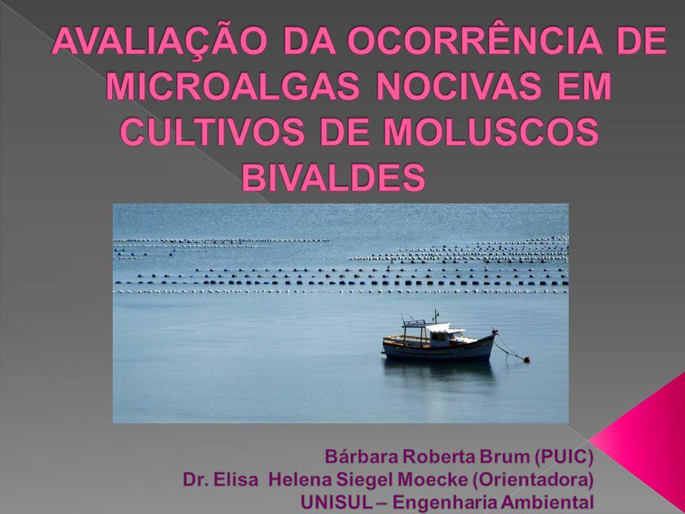  Maior produtor nacional de moluscos, produzindo em torno de 12.462 toneladas e chegando a 90% de toda a produção brasileira (EPAGRI, 2009);  Palhoça = com 251 toneladas de moluscos representando 14% do total produzido.