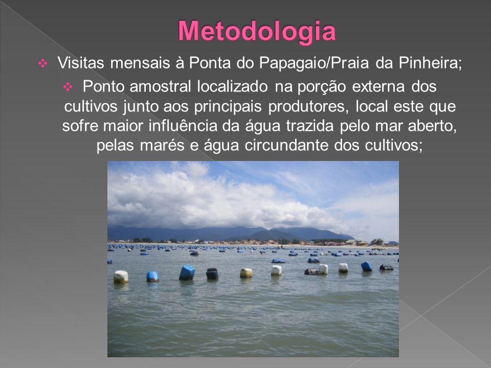  Visitas mensais à Ponta do Papagaio/Praia da Pinheira;  Ponto amostral localizado na porção externa dos cultivos junto aos principais produtores, local este que sofre maior influência da água trazida pelo mar aberto, pelas marés e água circundante dos cultivos;