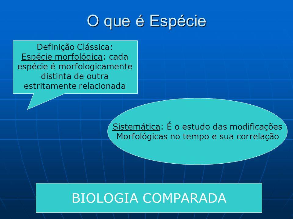 O que é Espécie Definição Clássica: Espécie morfológica: cada espécie é morfologicamente distinta de outra estritamente relacionada Sistemática: É o e