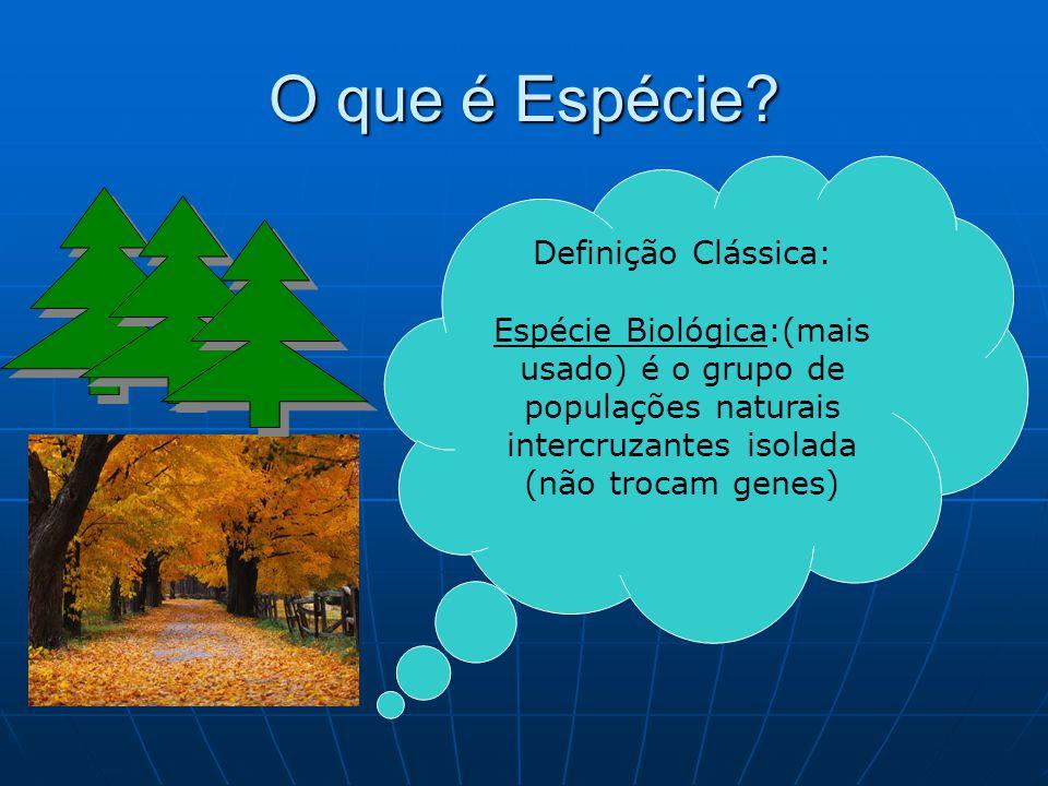 O que é Espécie? Definição Clássica: Espécie Biológica:(mais usado) é o grupo de populações naturais intercruzantes isolada (não trocam genes)