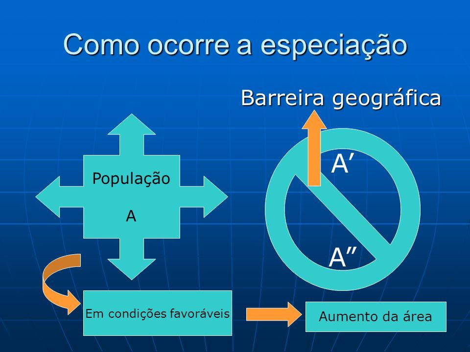 """Como ocorre a especiação Barreira geográfica População A A' A"""" Em condições favoráveis Aumento da área"""