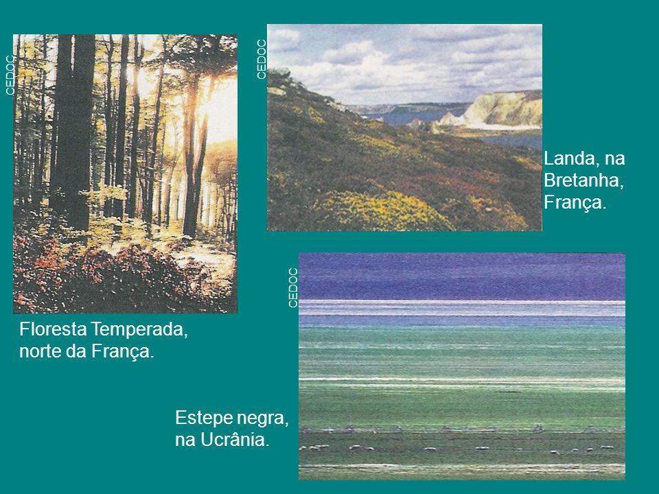 Floresta Temperada, norte da França. CEDOC Estepe negra, na Ucrânia. Landa, na Bretanha, França.