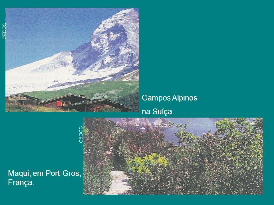 Campos Alpinos na Suíça. Maqui, em Port-Gros, França. CEDOC