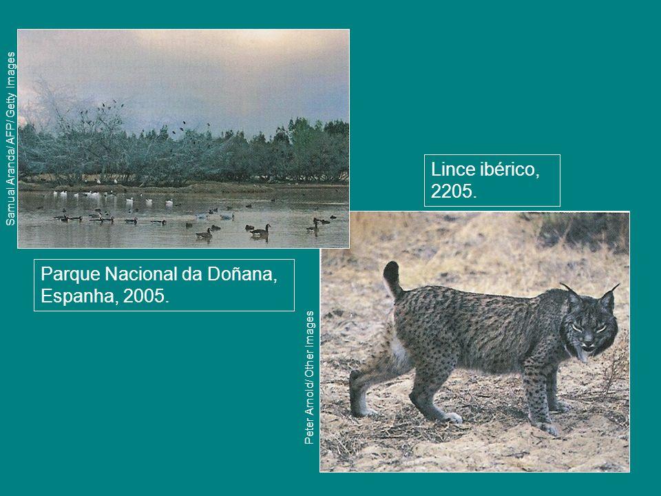 Parque Nacional da Doñana, Espanha, 2005. Samual Aranda/ AFP/ Getty Images Lince ibérico, 2205. Peter Arnold/ Other Images