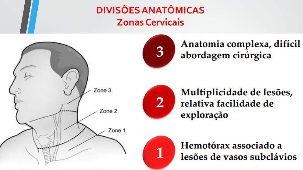 DIVISÕES ANATÔMICAS Zonas Cervicais