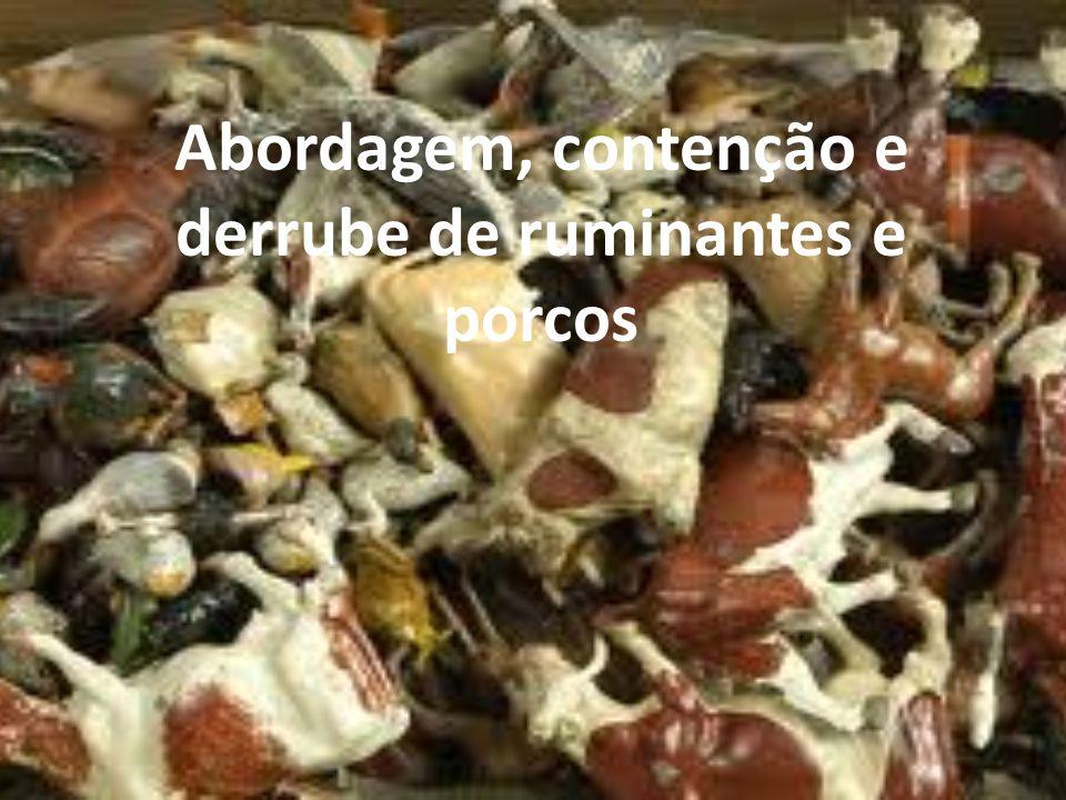 Abordagem, contenção e derrube de ruminantes e porcos