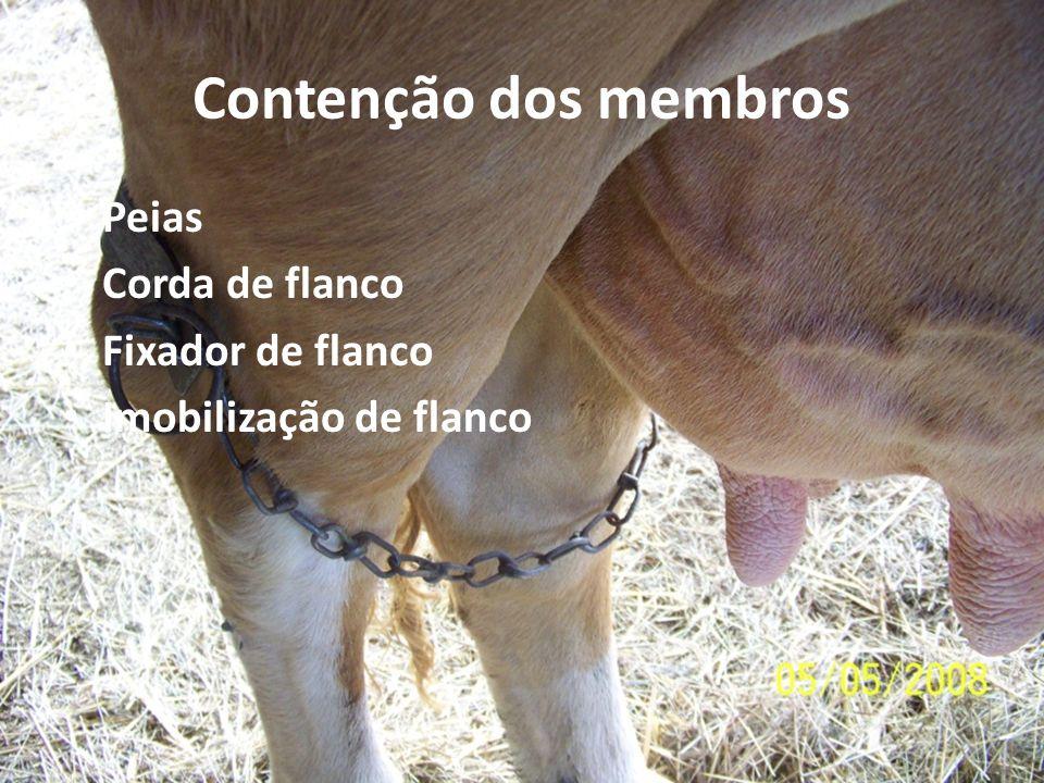 Contenção dos membros Peias Corda de flanco Fixador de flanco Imobilização de flanco