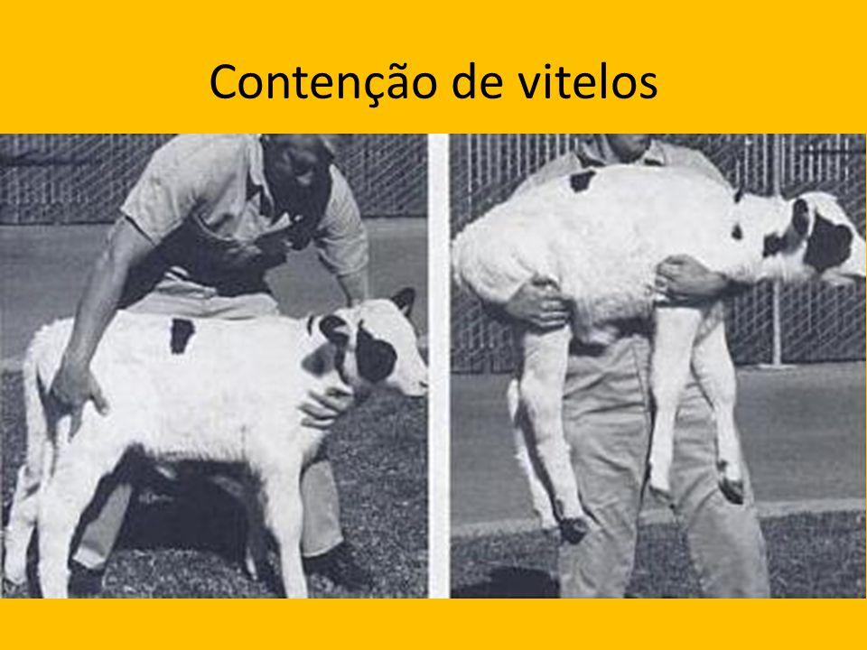 Contenção de vitelos