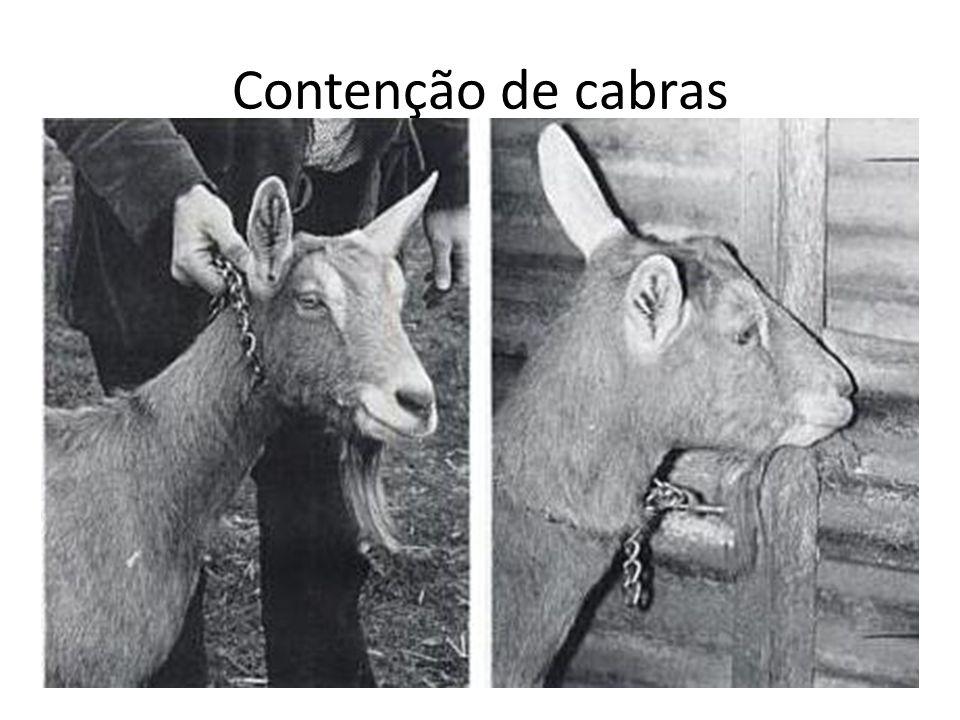 Contenção de cabras