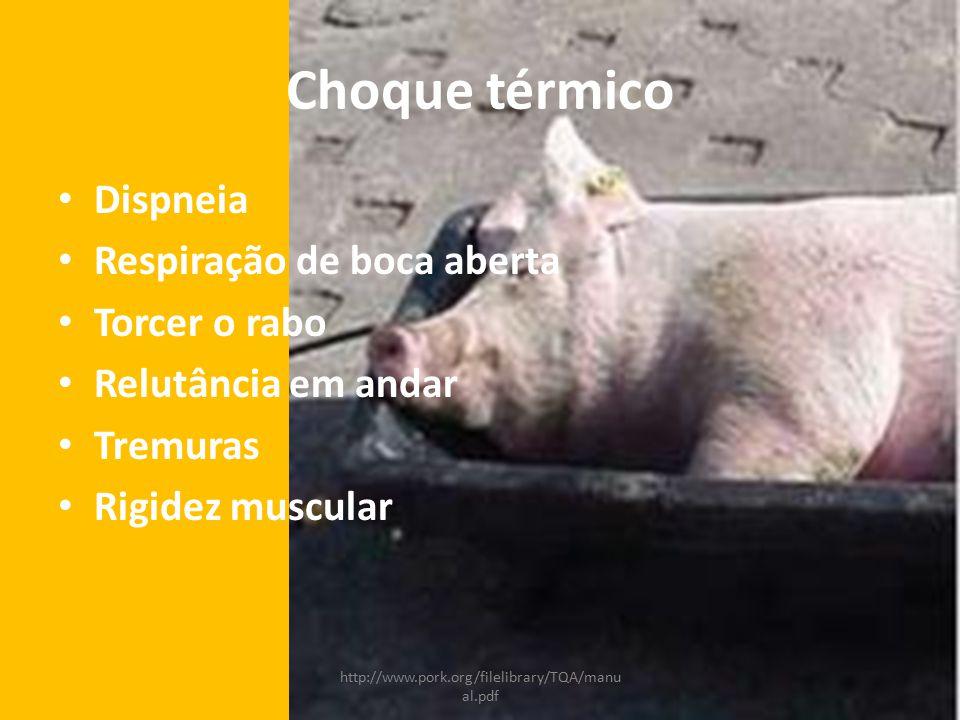 Choque térmico Dispneia Respiração de boca aberta Torcer o rabo Relutância em andar Tremuras Rigidez muscular http://www.pork.org/filelibrary/TQA/manu al.pdf