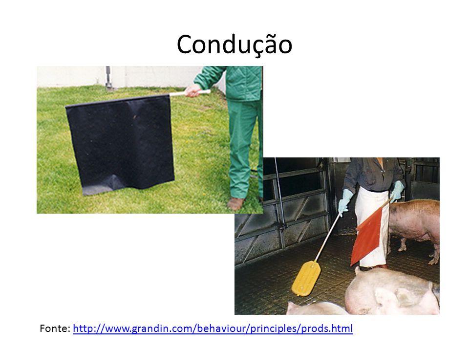 Condução Fonte: http://www.grandin.com/behaviour/principles/prods.htmlhttp://www.grandin.com/behaviour/principles/prods.html