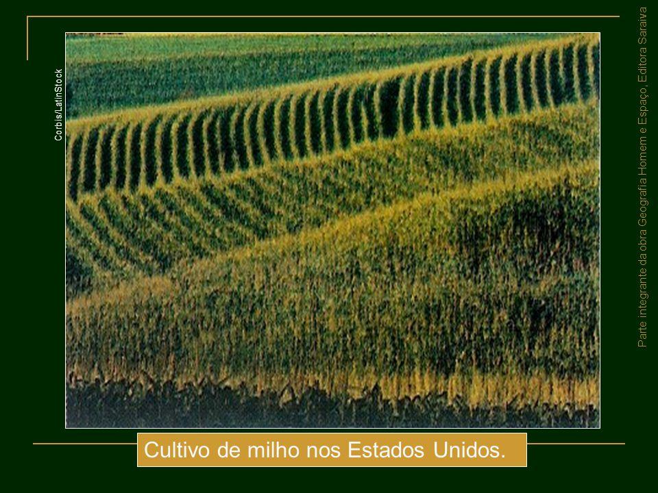 Parte integrante da obra Geografia Homem e Espaço, Editora Saraiva Cultivo de milho nos Estados Unidos. Corbis/LatinStock