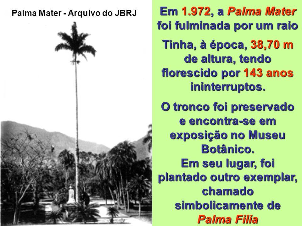 Palma Mater (Roystonea oleracea, Jacq. Cook) Esta palmeira foi plantada pelo próprio Príncipe Regente e a partir de então ficou conhecida popularmente