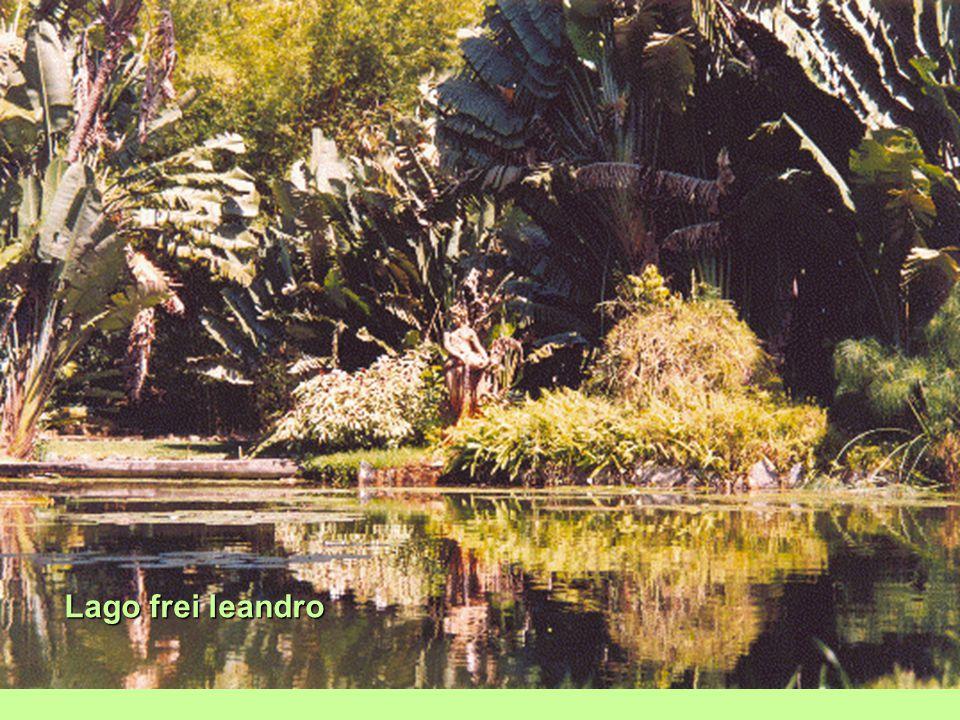 Árvore-do-viajante (ravenala madagascariensis) é uma planta herbácea de tronco alto, endêmica de madagascar, pertencente à família strelitziaceae Erro