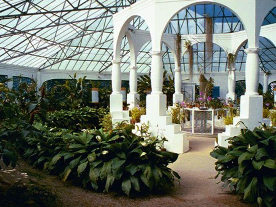 Além de abrigar mais de 700 espécies de orquídeas, o orquidário abriga plantas ornamentais como antúrios, filodendros, avencas e samambaias, um conjun